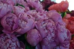 Pike Place Peonies