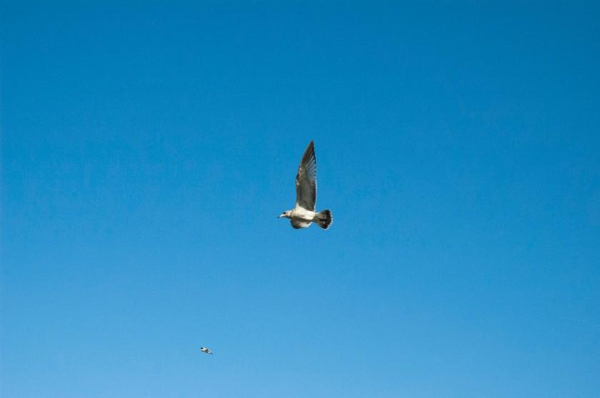 Birds at Lyons Ferry