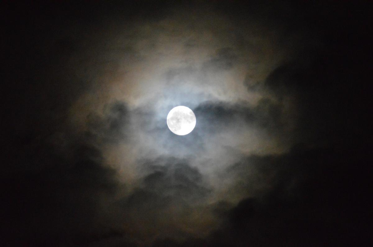 Midnight Moon & SweetHusbands