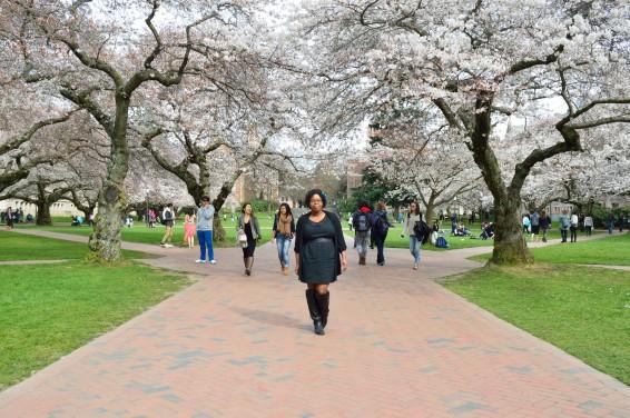 CherryBlossoms_3