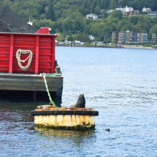 Harbor Tour4