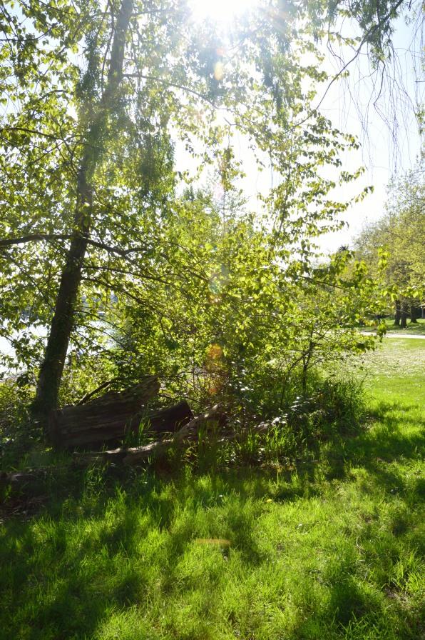 Seward Park 7